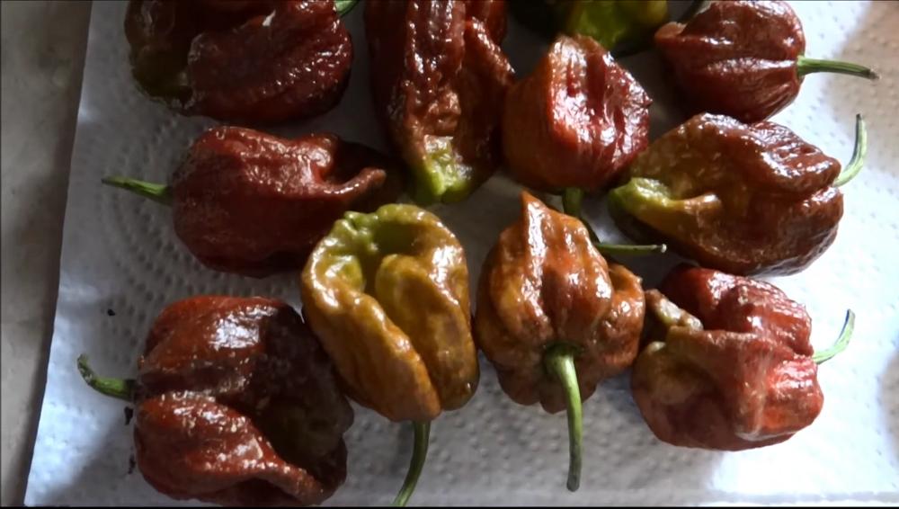 Chocolate 7 pot pepper