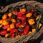 How to Dehydrate Habanero Peppers at Home